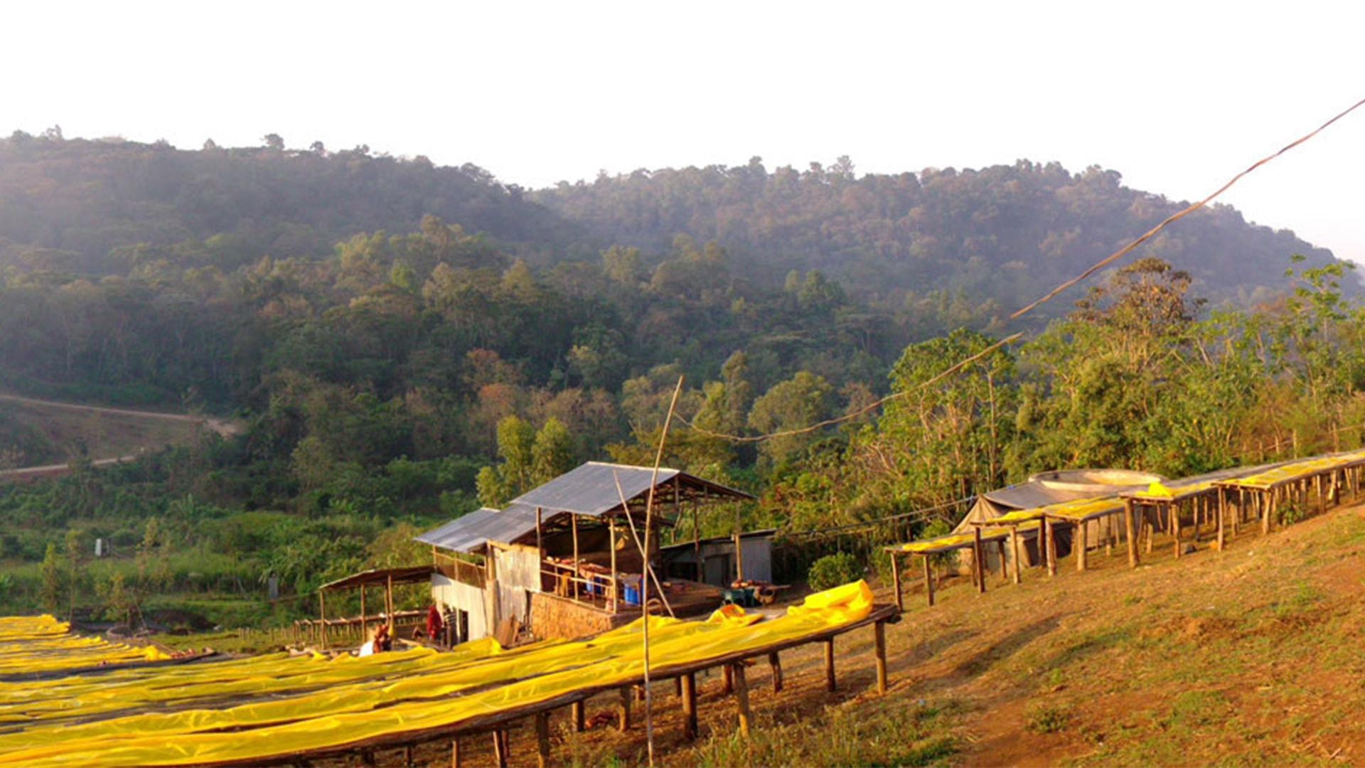 Anbassa artisan torrefacteur - origine du cafe