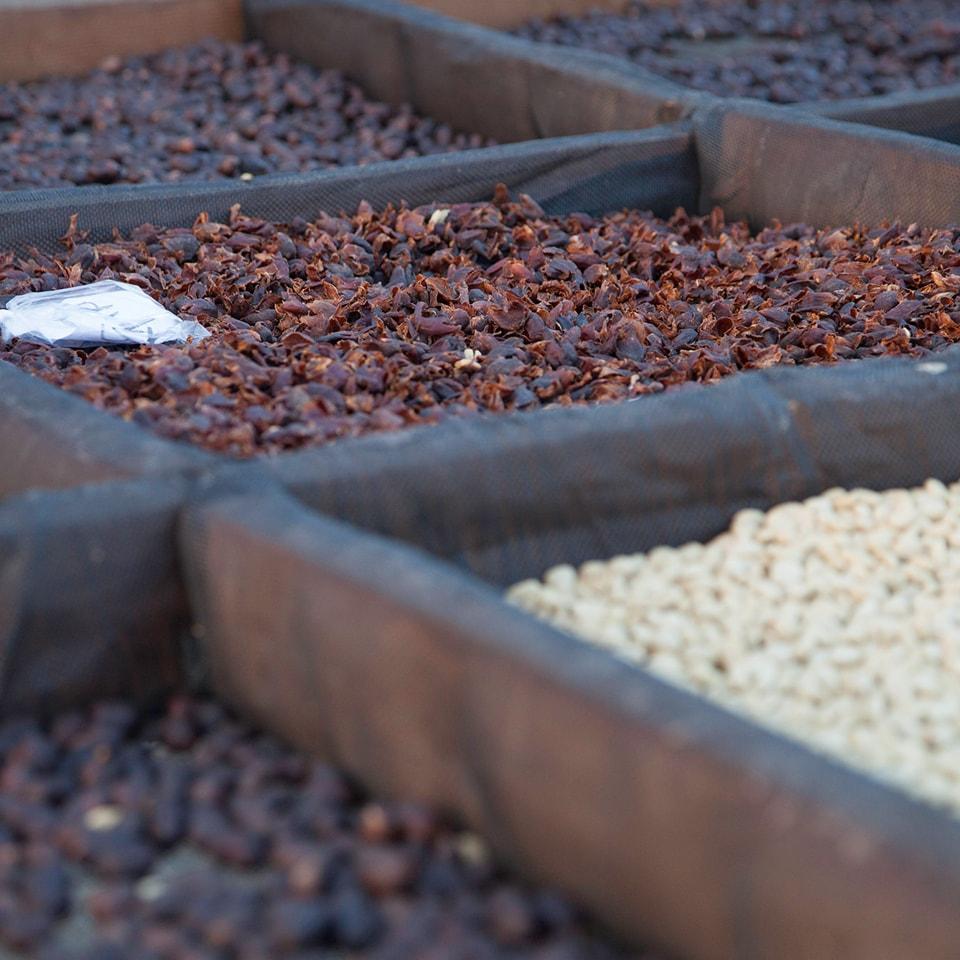 Anbassa-artisan-torrefacteur-arbre-cafe-vert-honey-slide-1-min