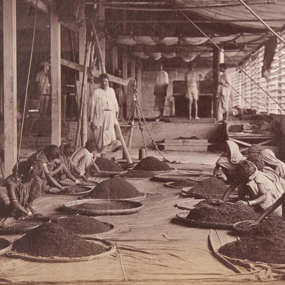 Anbassa-artisan-torrefacteur-breve-histoire-du-the-tea-tri-du-the-min