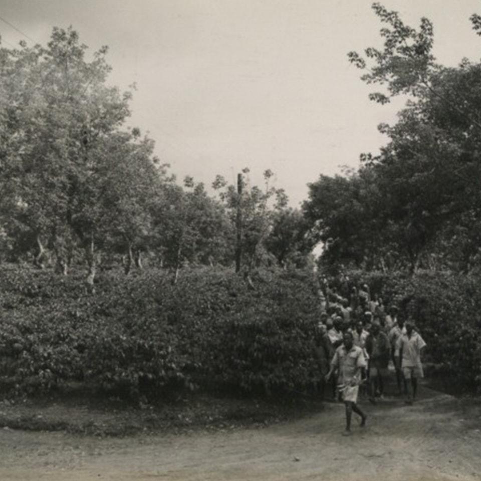 Anbassa-artisan-torrefacteur-les-arabicas-Cueilleurs-Kenya-1945-min
