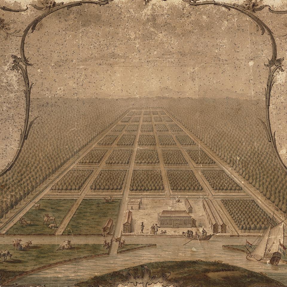 Anbassa-artisan-torrefacteur-les-arabicas-Plantation-cafe-Surinam-1700-min