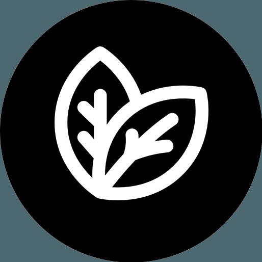Anbassa-artisan-torrefacteur-thes-blanc-vector
