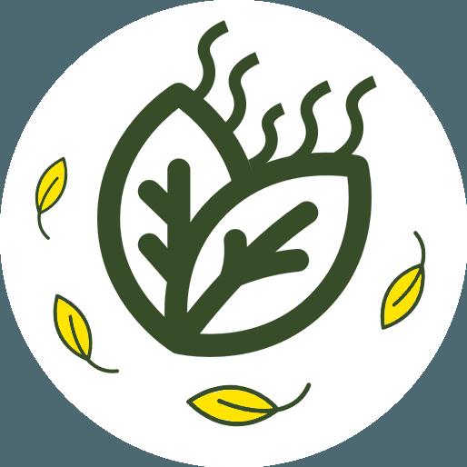 Anbassa-artisan-torrefacteur-thes-noir-aromatise-vector-5