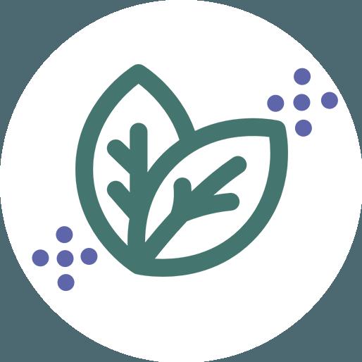 Anbassa-artisan-torrefacteur-thes-oolong-vector-2