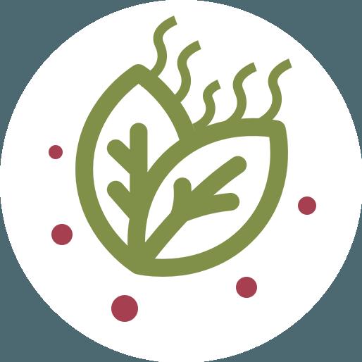 Anbassa-artisan-torrefacteur-thes-vert-aromatise-vector-2