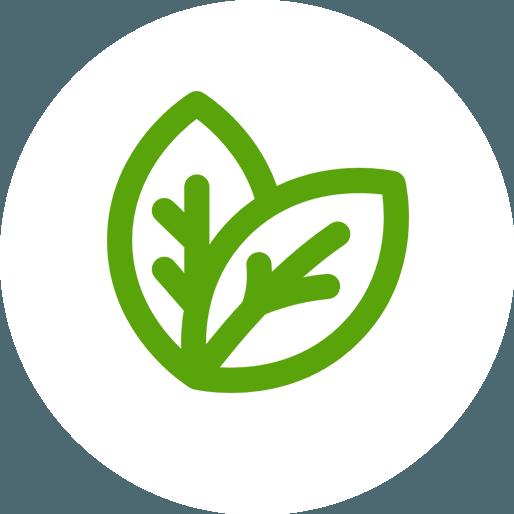 Anbassa-artisan-torrefacteur-thes-vert-nature-vector