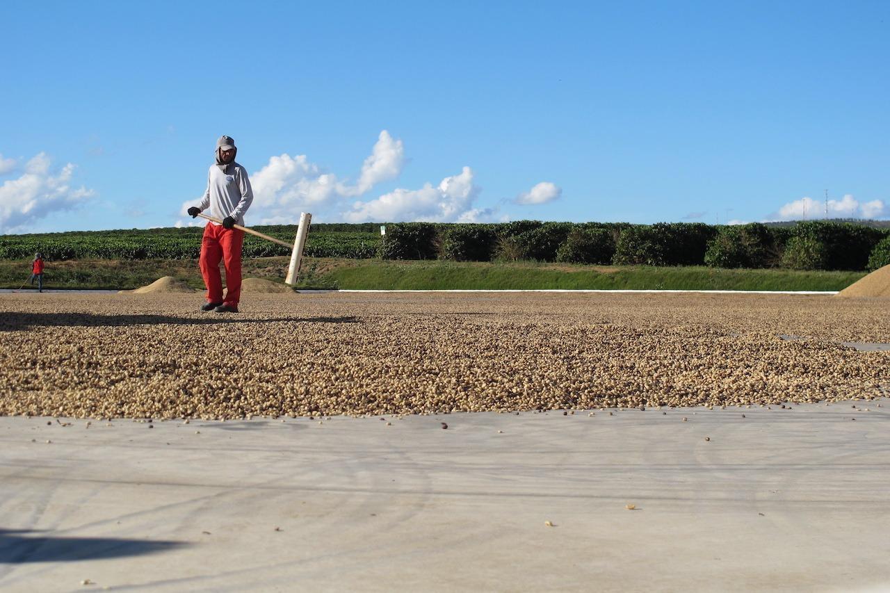 Anbassa artisan torréfacteur café Brésil Cerrado Mineiro plantation
