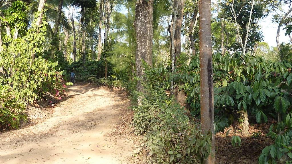 Anbassa artisan torréfacteur café Inde Malabar plantation