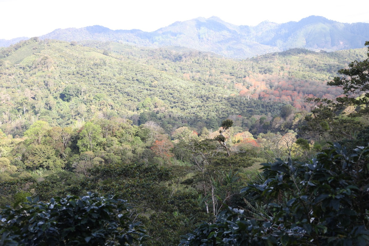 Anbassa artisan torréfacteur café Nicaragua Matagalpa plantation