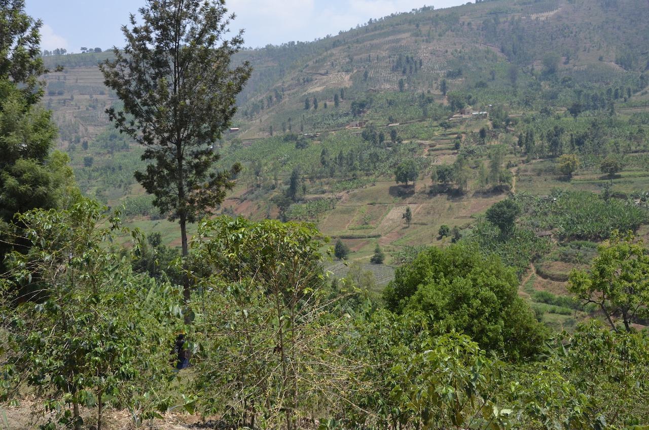 Anbassa artisan torrefacteur café Rwanda Titus plantation