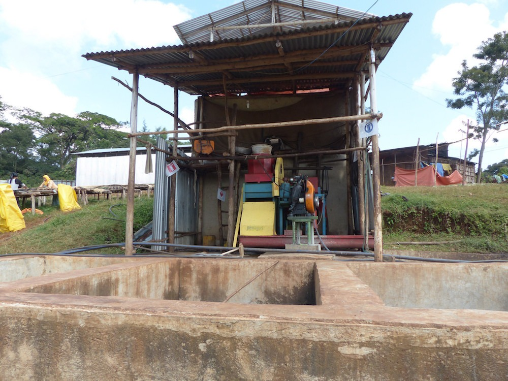 Anbassa-artisan-torrefacteur-cafe-ethiopie-limmu-chalchissa-plantation