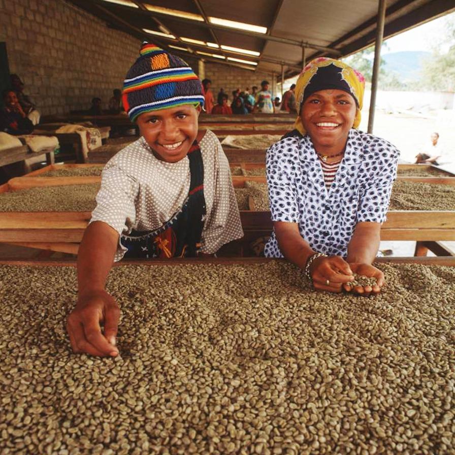 Anbassa-artisan-torrefacteur-cafe-nouvelle-guinée-sigri-plantation-2