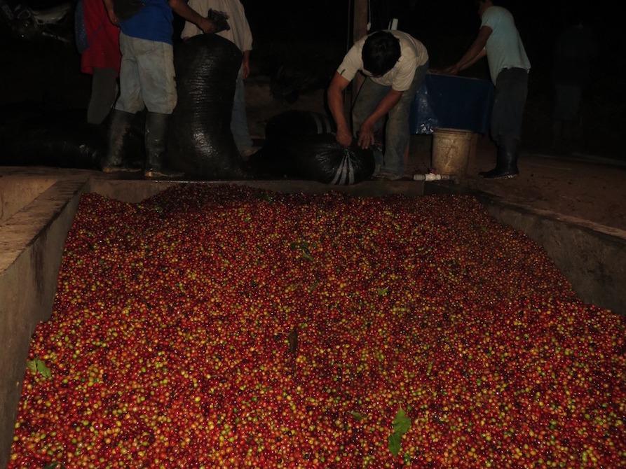Anbassa-artisan-torrefacteur-cafe-perou-elpalomar-plantation-6
