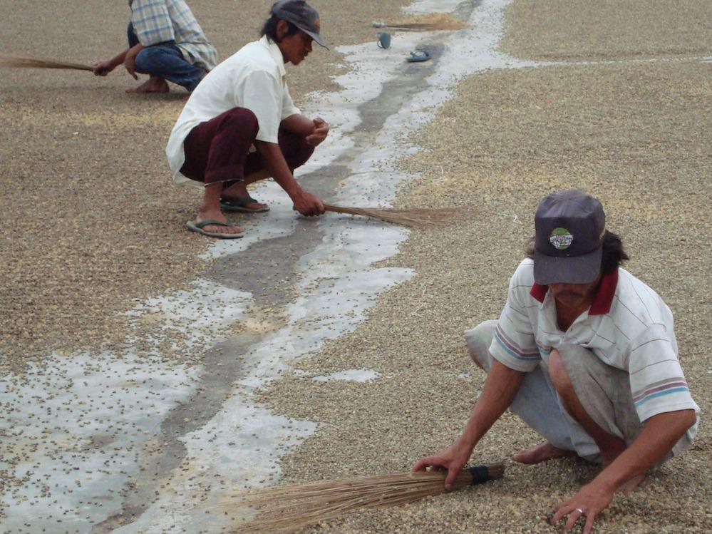 Anbassa-artisan-torrefacteur-cafe-sumatra-shere-khan-plantation-1