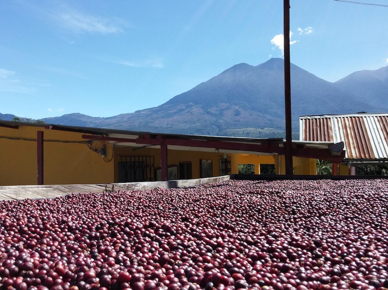 anbassa-artisan-torrefacteur-cafe-guatemala-blackhoney-montedeoro-1