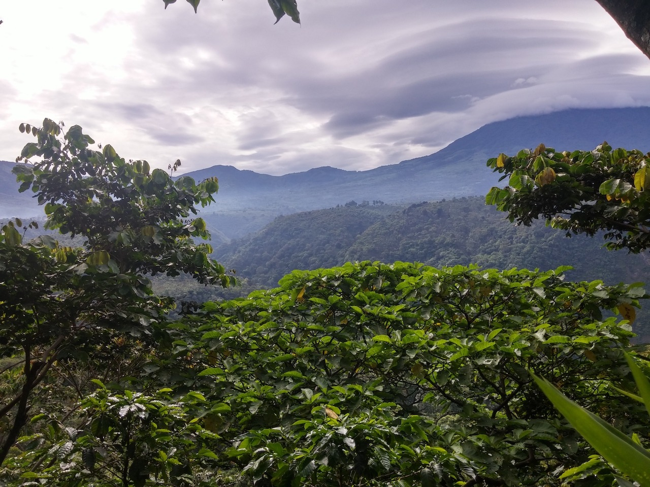 anbassa-artisan-torrefacteur-cafe-guatemala-blackhoney-montedeoro-3