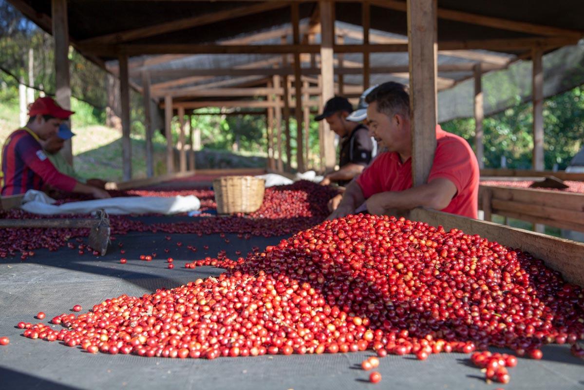Anbassa Artisan Torrefacteur Honduras1