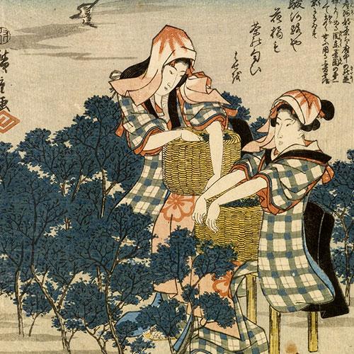 Anbassa Artisan Torrefacteur Breve Histoire Du The Tea Ibaya Kyubei Tokaido Gojusan Tsui 1