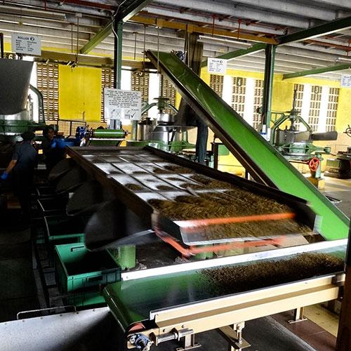 Anbassa Artisan Torrefacteur Different Type De The Glenloch Tea Factory 4