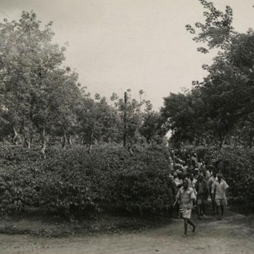 Anbassa Artisan Torrefacteur Les Arabicas Cueilleurs Kenya 1945 1