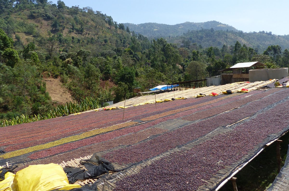 Anbassa Artisan Torrefacteur Cafe Grands Terroirs Sidama Bensa Shantawene Ethiopie Img 2 Min