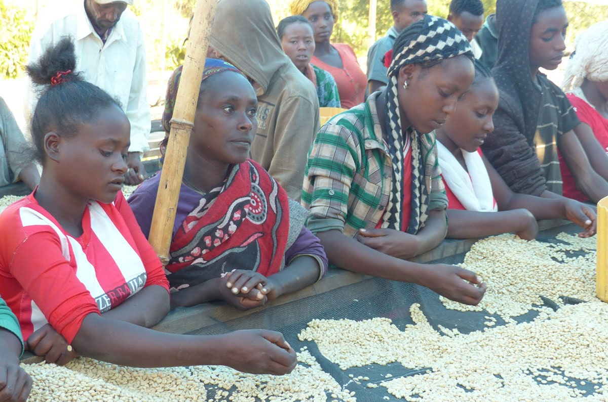 Anbassa Artisan Torrefacteur Cafe Grands Terroirs Sidama Bensa Shantawene Ethiopie Img 3 Min