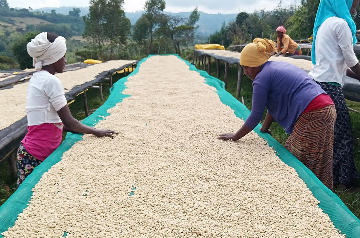 Anbassa Artisan Torrefacteur Cafe Ethiopie Nano Chella Bio 3 Min