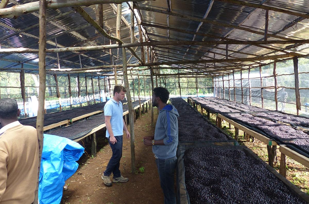 Anbassa Artisan Torrefacteur Cafe Grands Terroirs Ethiopie Sheka Kawo Kamina Bio 4 Min